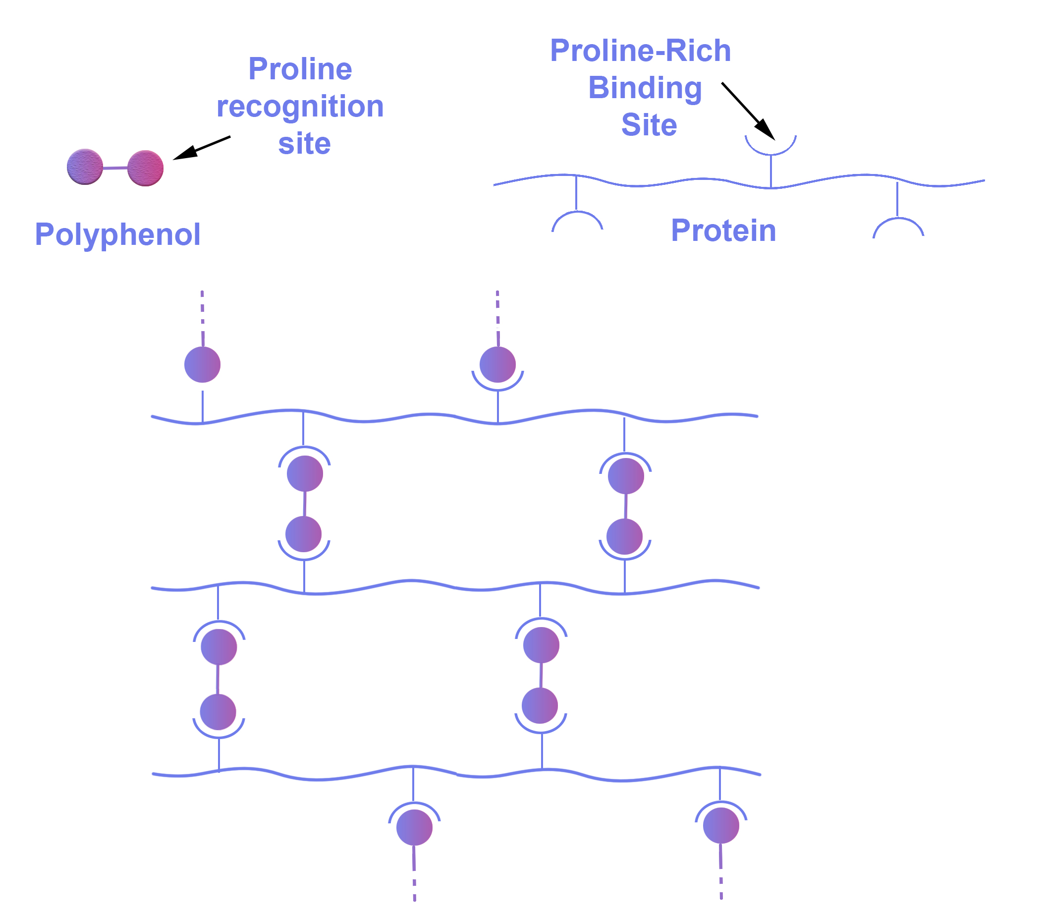 Figure 3 ProteinPolyphenolsComplexation-1