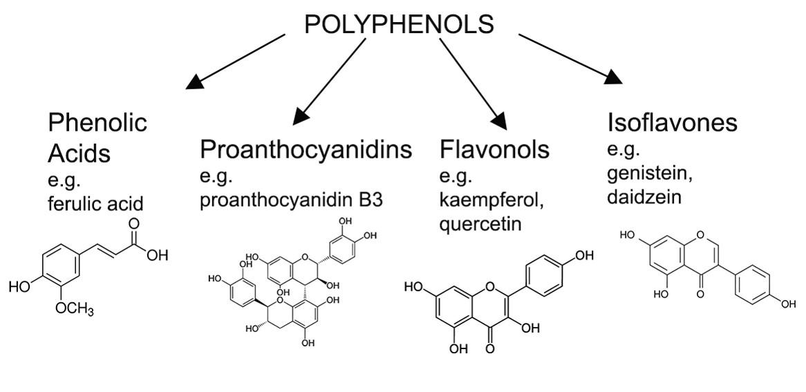 Figure 2 Polyphenolsjpg